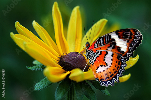 Foto op Canvas Vlinder fly fly butterfly