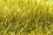 herbe / gazon / foin jaune en gros plan