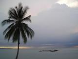 coconut tree on beach at bintan indonesia poster