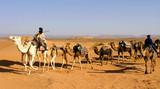 caravane de dromadaires dans le désert poster