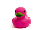 purple, pink rubber duck on white poster