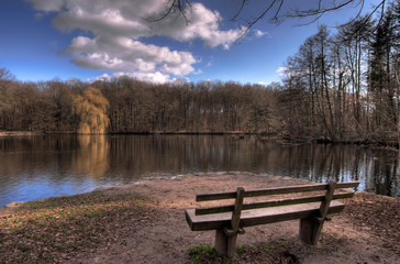 forest and park bench