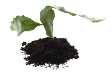 growing plant in soil