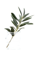 olive branch in glass