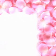 rose petal border 2