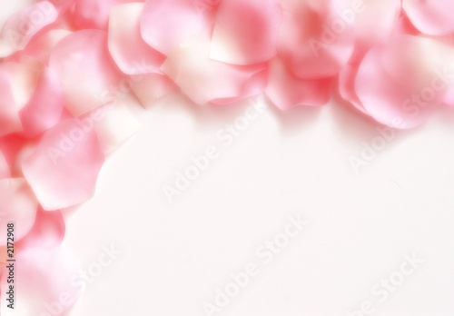 dreamy rose petal border