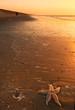 starfish and sunset