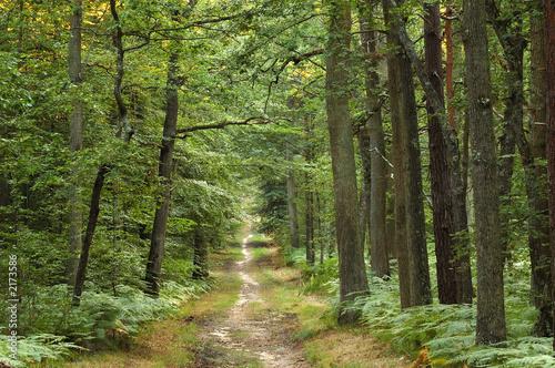 AluDibond Wald foret