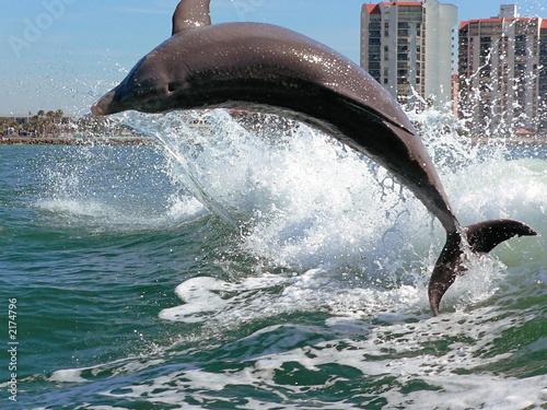 Foto op Aluminium Dolfijn clearwater dolphin