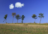 tree line with two cumulus clouds poster