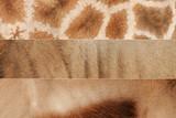 animal skin textures poster