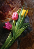 tulips and rock