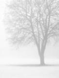 bare tree in winter fog poster