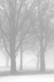 bare trees in winter fog poster
