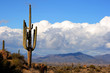 high desert with cactus,mountains and clouds - 2201565