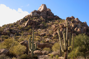 desert scene with boulders and saguaros