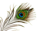 Fototapety peacock feather eye