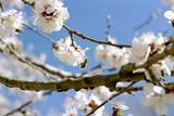spring - 2212964