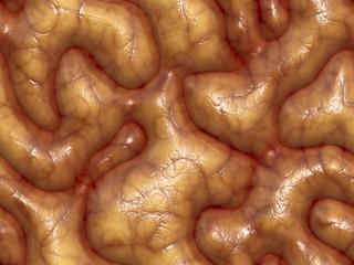 3d brains