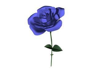 rose fleur bleue