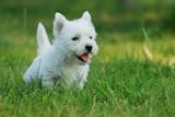 Fototapete Closeup - Hund - Haustiere