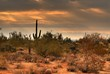 desert storm approaching 7