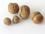 several walnuts poster