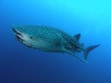 Fototapete Haie -  - Fische