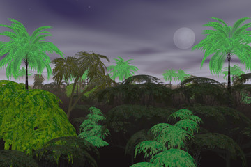night in jungle