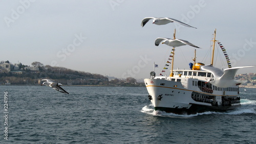 seagulls and ship in istanbul