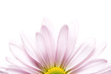 Fototapety daisy sunrise