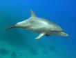 Leinwandbild Motiv delfin 02