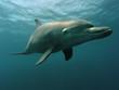 Leinwandbild Motiv delfin 04