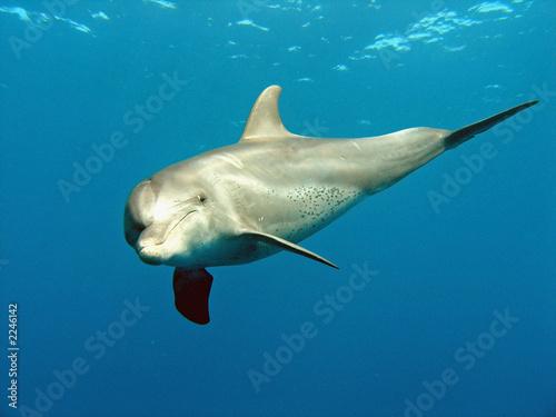 Leinwandbild Motiv delfin 03