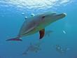 delfin 06