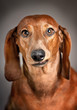 roleta: dogs 12