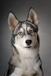 roleta: dogs 13