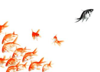 black fish: ou le vilain petit canard...