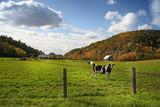 autum grazing poster