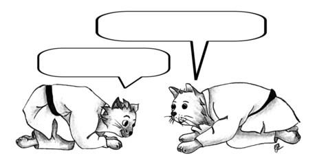 salut sur le tatami - chats judoka