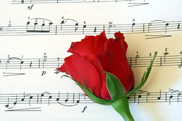red rose on music