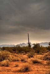 desert storm approaching 14