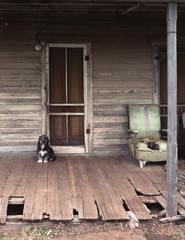 guard dog by door