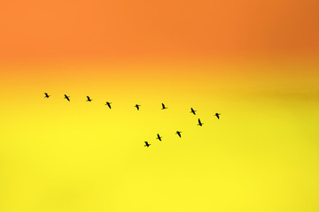 """birds in classic """"v"""" formation"""