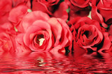 red roses with water effect poster