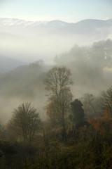 trees_on_fog