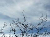 cloudy sky with bare branches poster