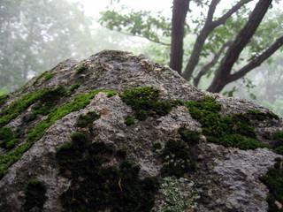 stone  moss