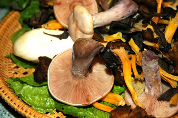 scottish wild mushrooms, hand picked