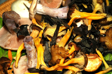 scottish, wild mushrooms, hand picked,